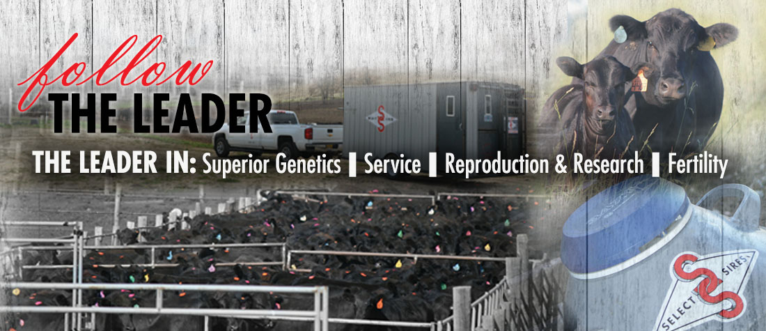 Beef Breeding Projects